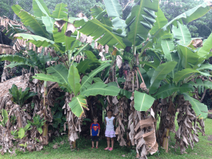 13 Things to Do in Kauai with Children. Kamokila Hawaiian Village is one of our favorite family activities, It is inexpensive, cultural, beautiful, and peaceful to canoe down the river.