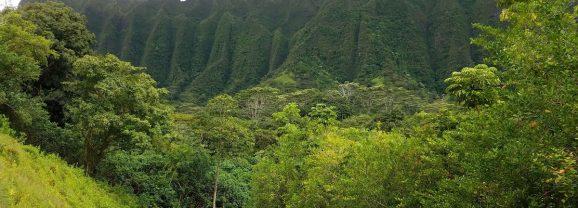 Kid Friendly Hikes on Oahu