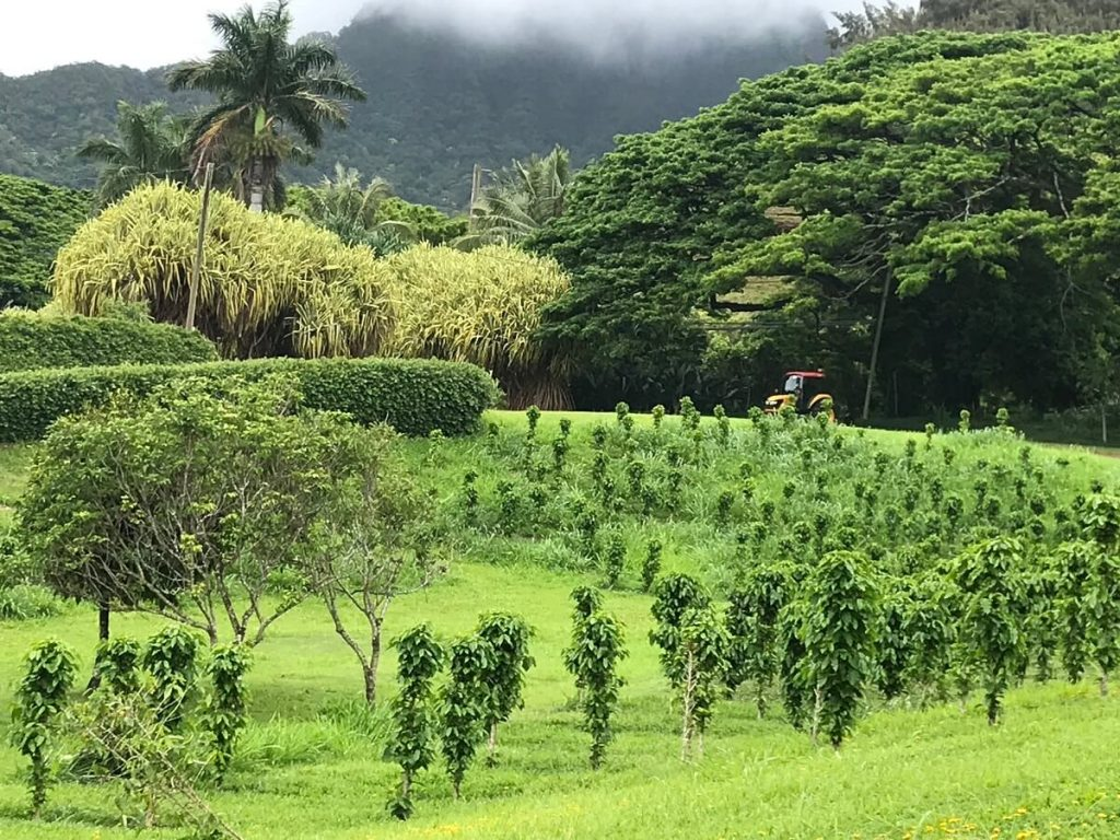 Oahu Itinerary 7 Days: Tropical Macadamia Nut Farm