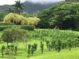Oahu Itinerary 7 Days: Tropical Macadamia Nut Farm