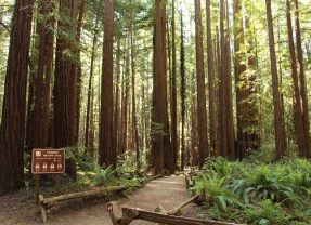 Things to Do in Sonoma County Today: A Local's Guide