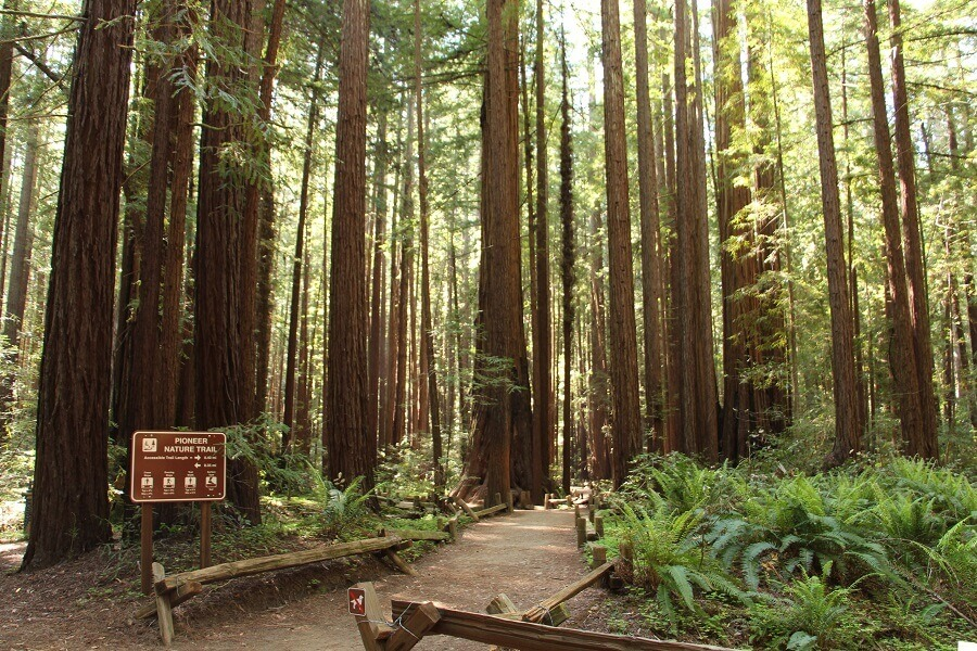 Christmas in California - Armstong Redwoods