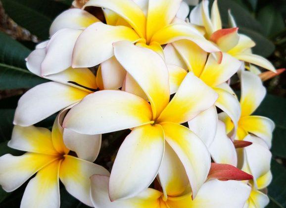 Oahu Instagram Spots: Most Beautiful Places in Hawaii
