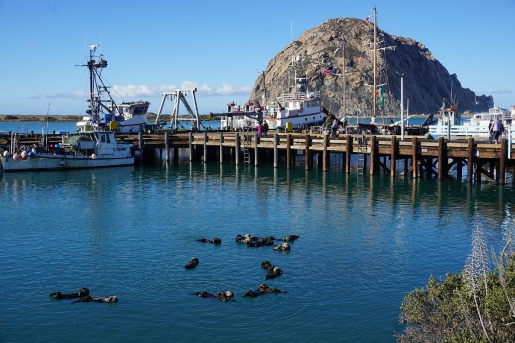 Morro Bay is just one stop on California's Highway 1,  San Francisco to San Diego  road trip. With kids or without, this itinerary deserves to be on all bucket lists. From Northern California to Couthern Salifornia, we've got you covered with budget and luxury recommendations. #freetotravelmama #sanfrancisco #california #californiaroadtrip