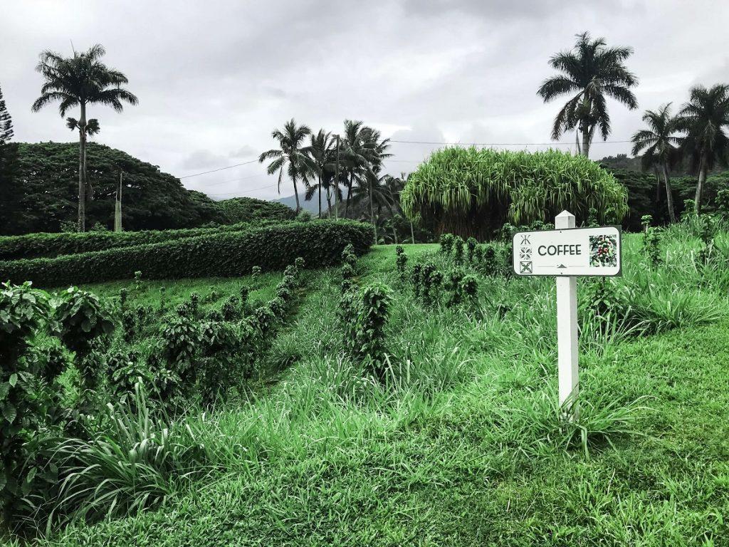 Tropical Macadamia Nut Farm Ali'i Tour Farm View  #freetotravelmama | Oahu Hawaii Photography | Oahu Instagram Pictures |  Oahu Instagram Spots | Instagram Worthy Pictures in Oahu | Hawaii Instagram Pictures Oahu | Best Places for photos Oahu | Best Photo Spots Oahu